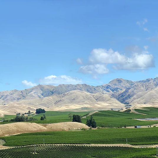rural vineyard in marlborough